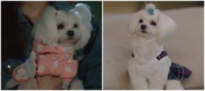 dogs-fashion